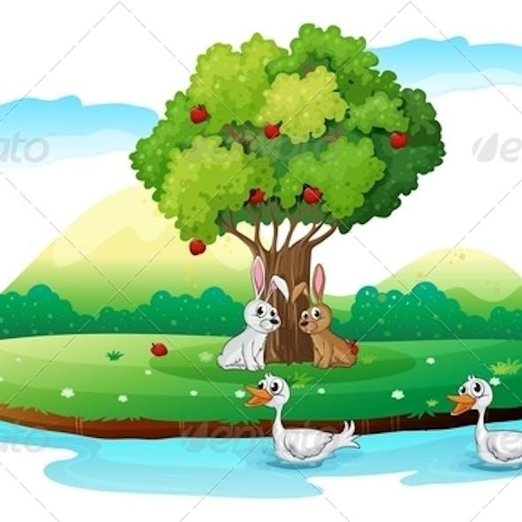 Island with Animals
