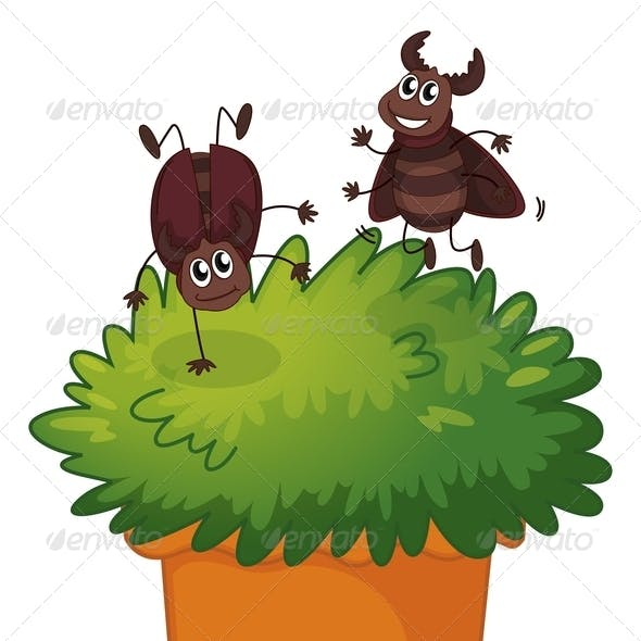 Playful Cockroaches with Plant