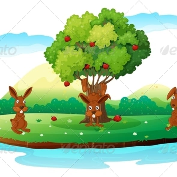An Island with Three Playful Rabbits