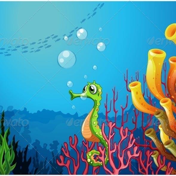 Seahorse Near Coral Reefs