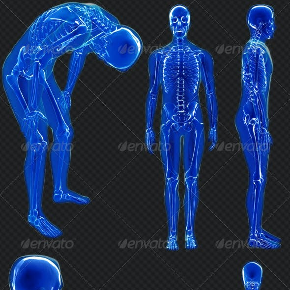 Human X-Ray - 10 Poses Pack