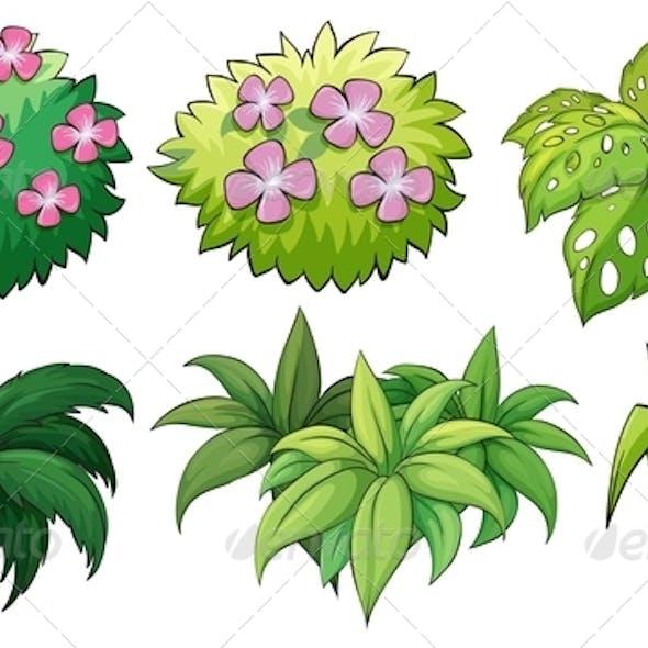 Six Ornamental Plants