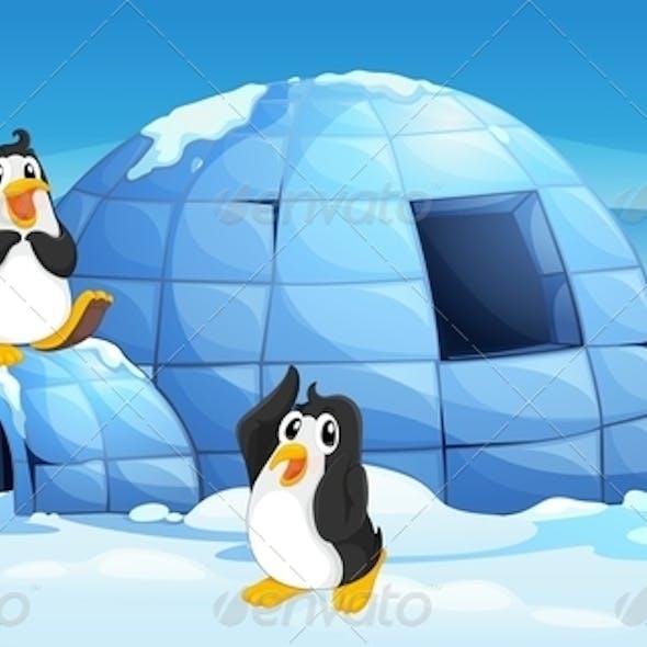 Three Penguins Near an Igloo
