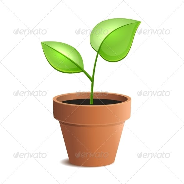 Young Green Plant in Pot