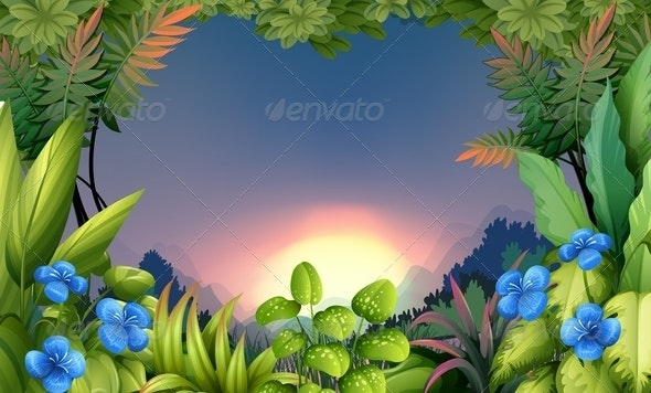 Morning in the Forest - Landscapes Nature