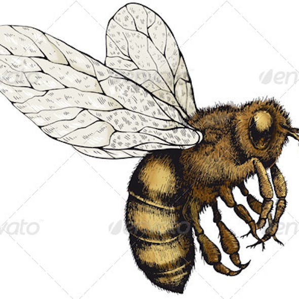 Bee on a Transparent Background