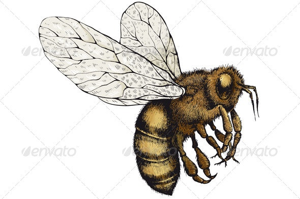 Bee on a Transparent Background - Animals Illustrations