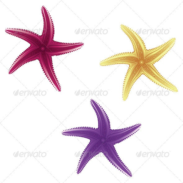 Starfishes - Animals Characters