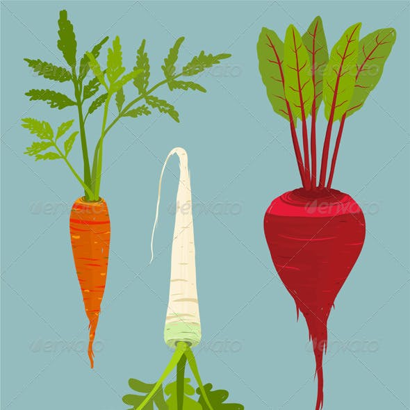 Growing Root Vegetables Set with Green Leafy Top