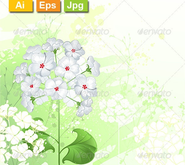 White Wild Flowers - Flowers & Plants Nature