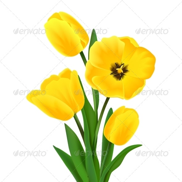 Tulip Flower Bouquet - Flowers & Plants Nature
