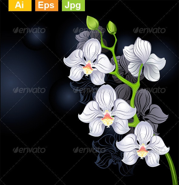 White Orchids - Flowers & Plants Nature