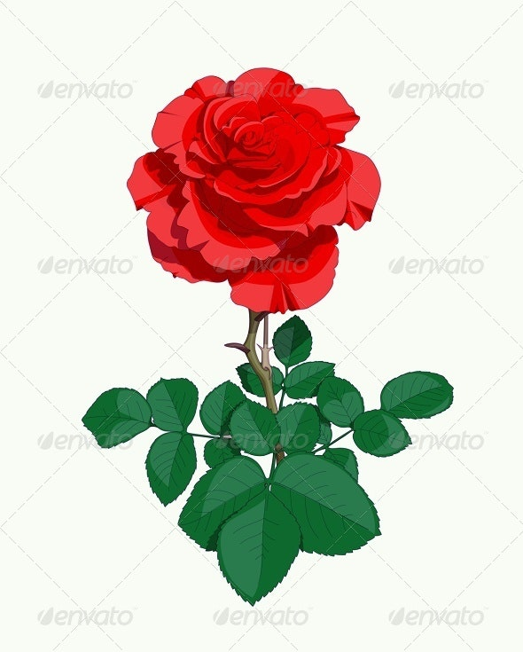 Red Rose - Flowers & Plants Nature