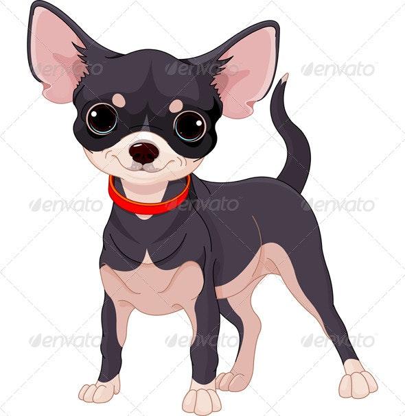 Chihuahua - Animals Characters