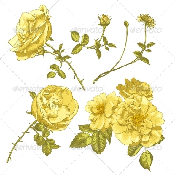 Set of Floral Design Elements. - Patterns Decorative