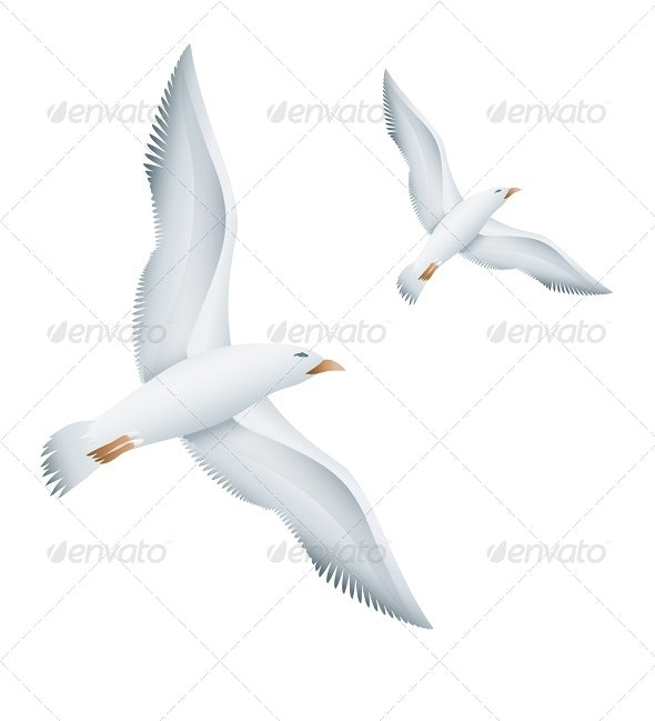 Flying Seagulls Birds - Animals Characters
