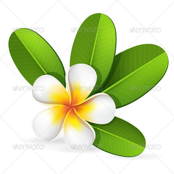 Frangipani Flower - Flowers & Plants Nature