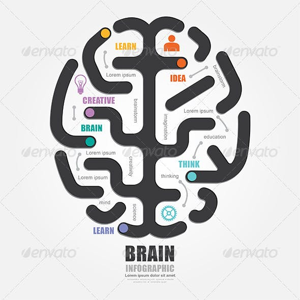 Infographics Vector Brain Design Diagram Line Styl