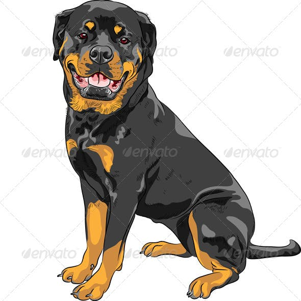 Rottweiler Breed Dog