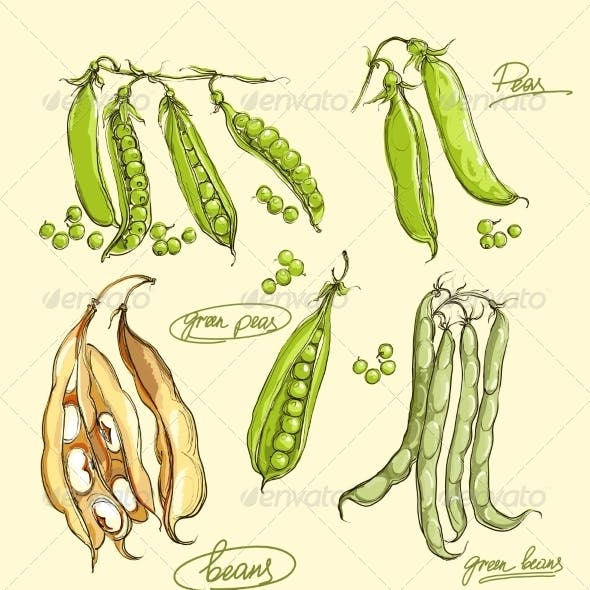 Green Peas Illustration