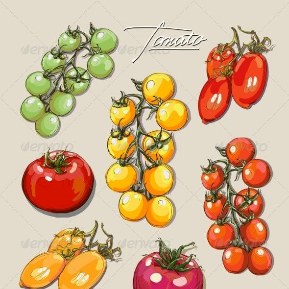 Tomatoes Illustrations