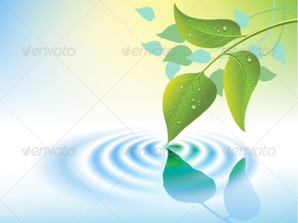 Water Ripple and Leaf - Backgrounds Decorative